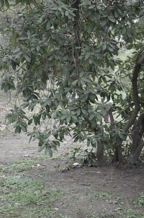 Das Bild zeigt einen Ausschnitt von einem grünen Busch.